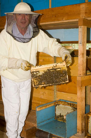 only senior men: Beekeeper holding honeycomb