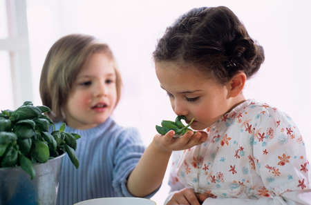 sensory perception: Two children with herbs in kitchen LANG_EVOIMAGES