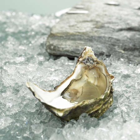 ice crushed: Oester op crushed ijs closeup LANG_EVOIMAGES