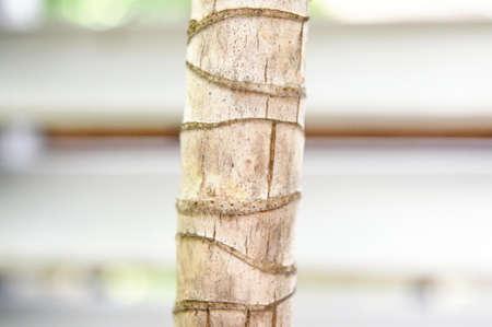 natue: trunk
