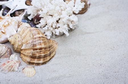 Seashells on the sand 免版税图像