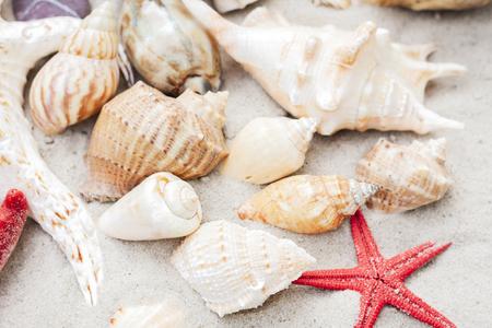 Seashells and seastars on the sand Stok Fotoğraf