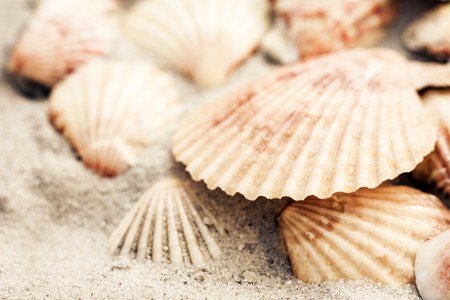 Seashells on the sand, summer beach background, travel concept with copy space for text