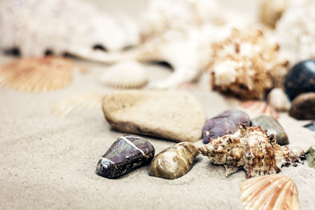 Seashells and stones on the sand, summer beach background travel concept with copy space for text