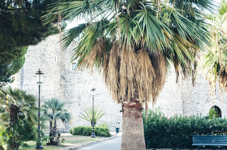 Palm tree alley near famous landmark Castello Ursino, ancient castle in Catania, Sicily, Southern Italy