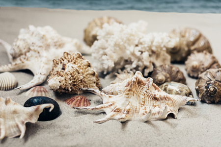 Seashells on the sand, summer beach background travel concept with copy space for text