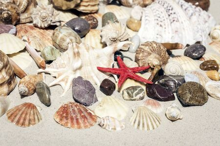 Seashells, sea stars and stones on the sand, summer beach background travel concept with copy space for text Stock Photo