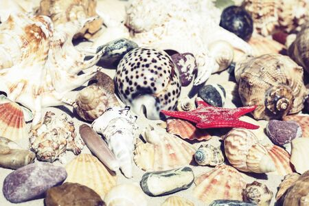Seashells, sea stars and stones on the sand, summer beach background travel concept with copy space for text