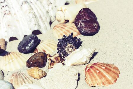 Seashells and stones on the sand, summer beach background travel concept with copy space for text Banco de Imagens