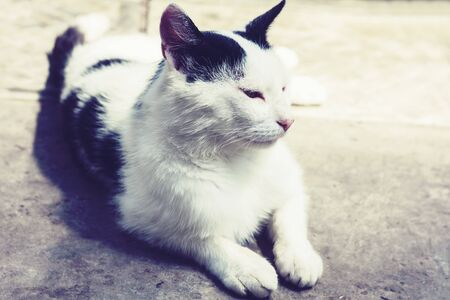 Black and white cat sitting on the street Stockfoto