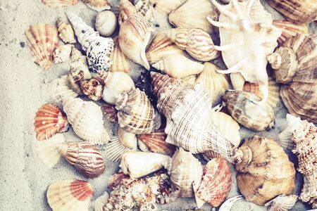 Seashells on the sand, summer beach background travel concept with copy space for text Zdjęcie Seryjne