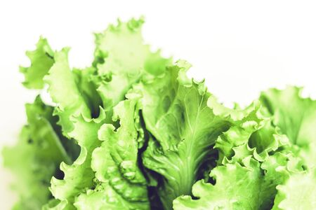 Lettuce salad background with copy space for your text Zdjęcie Seryjne