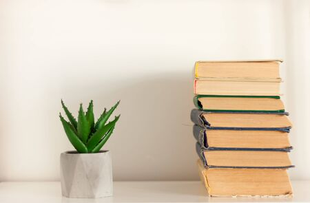 Potted house plant cactus succulent in gray pots and stack of books on white shelf against white wall. Cozy home modern decor in minimalistic scandinavian interior