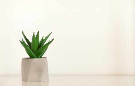 Potted house plant cactus succulent in gray pot on white shelf against white wall. Cozy home modern decor in minimalistic scandinavian interior Фото со стока