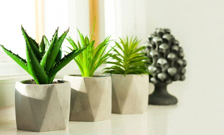 Set of potted house plant cactus succulent in gray pots on white on the windowsill. Cozy home modern decor in minimalistic scandinavian interior Фото со стока