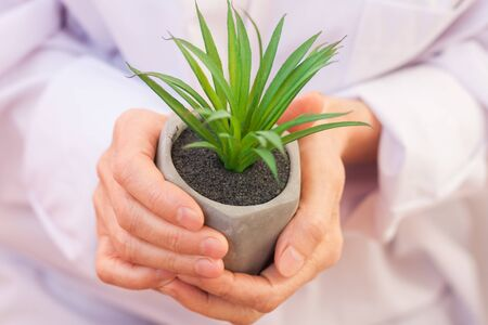 mature woman hands holding growing plant cactus succulent in gray pot. Protection, progress, care and attention concept. Planting and gardening Фото со стока