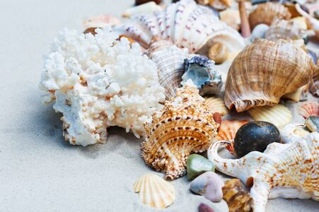 Seashells, sea stars, coral and stones on the sand, summer beach background travel concept with copy space for text Archivio Fotografico
