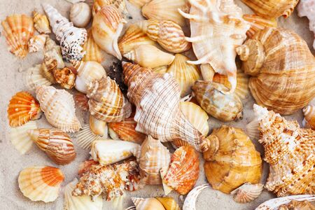 Seashells, sea stars, coral and stones on the sand, summer beach background travel concept with copy space for text Stock Photo