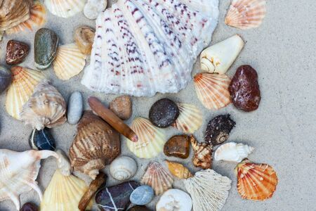Seashells, sea stars, coral and stones on the sand, summer beach sea background travel concept Banque d'images