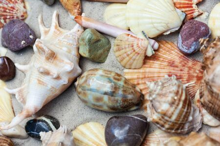Seashells, sea stars, coral and stones on the sand, summer beach sea background travel concept Stock Photo