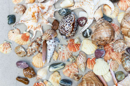 Seashells, sea stars, coral and stones on the sand, summer beach sea background travel concept