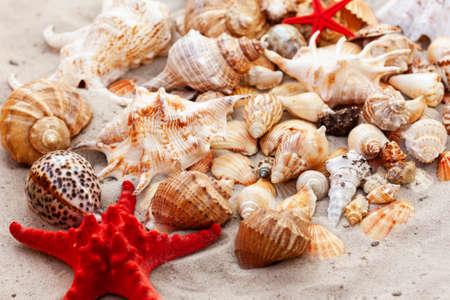 Seashells, sea stars, coral and stones on the sand, summer beach background travel concept with copy space for text
