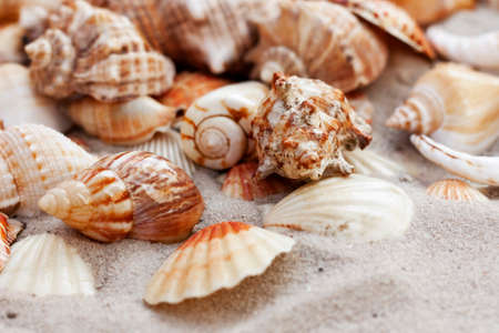 Seashells, sea shells on the sand, summer beach background travel concept with copy space for text