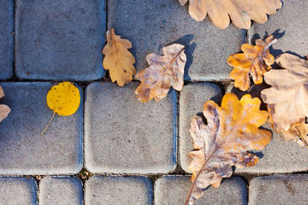 Dry red yellow leaves on the sidewalk, paving stones, concrete tiles in autumn fall on a sunny day