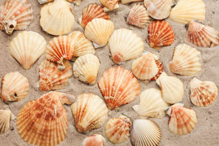 Seashells on the sand, summer beach tropical background travel concept with copy space for text.
