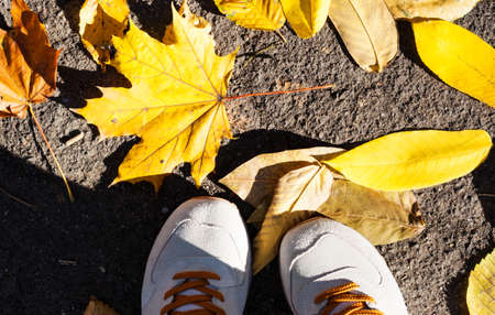 Gray gray sport shoes sneakers on the background of dry yellow leaves on the sidewalk in autumn fall on a sunny day