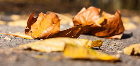Dry red yellow leaves on the sidewalk in autumn fall on a sunny day. Banque d'images