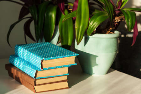 Distance home education: pile of books in colorful covers and Rhoeo plant Tradescantia in blue ceramic pots on a white table Standard-Bild