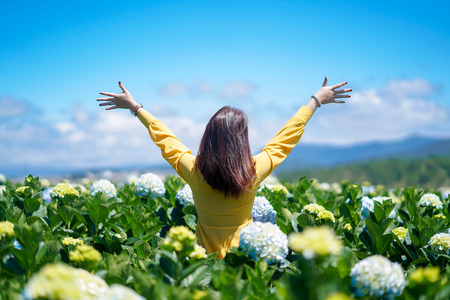 Happy Asian woman holds her hand in a field of Hydrangea flowers.