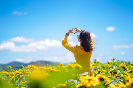 Happy carefree summer woman in sunflower field in spring. Cheerful multiracial Asian woman hands forming a heart shape on sunflowers field.