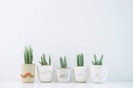 Succulents or cactus in clay pots plants in different pots. Potted cactus house plants on white shelf against white wall.