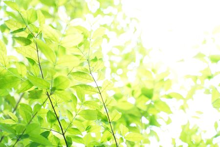Natural green leaf background with selective focus. Closeup nature view of green leaf on blurred greenery background