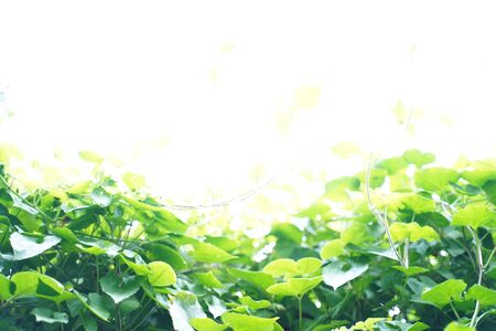 Natural green leaf background with selective focus. Closeup nature view of green leaf on blurred greenery background.