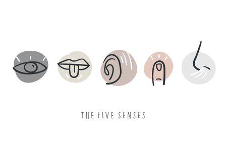 Iconos simples dibujados a mano que representan los cinco sentidos. Garabatos dibujados a mano.