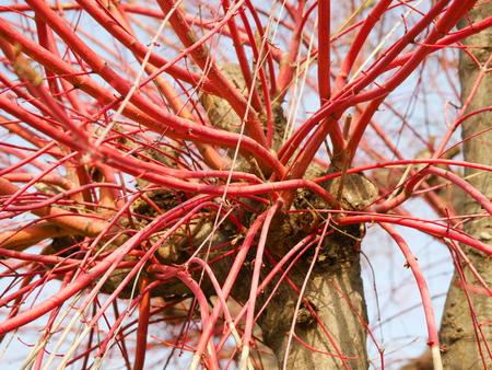 サンゴ館紅葉 写真素材 - 53787638