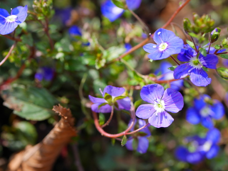 oxford: Veronica Oxford Blue