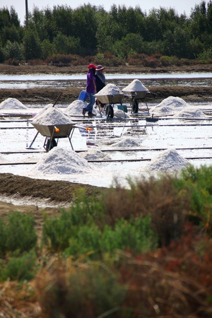 pan tropical: many people working in salt pan, treaditional occupation in Thailand