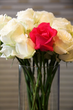 Beautiful flowers or red and white rose photo