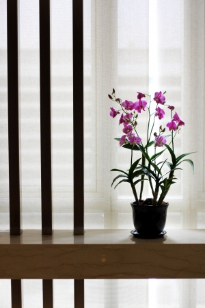 pink orchid in flowerpot near the window  photo
