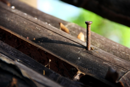 old nail and brown bamboo  photo