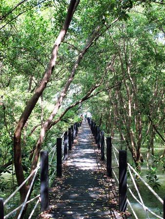 boardwalk trail: Wooden bridge, walkway through mangrove forest, Chonburi, Thailand. Stock Photo