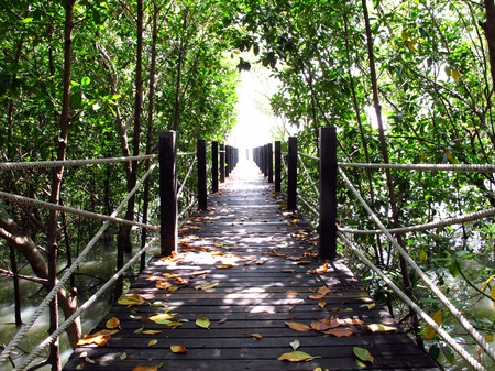 Wooden bridge, walkway through mangrove forest, Chonburi, Thailand. photo
