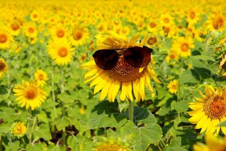 sole occhiali: Fiore di Sun con occhiali da sole Archivio Fotografico