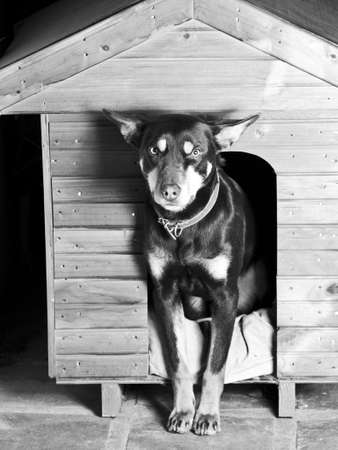 doghouse: Dog sitting at the entrance of his doghouse