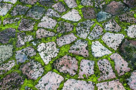 inbetween: paving with moss inbetween
