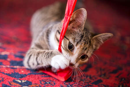 lint: A cute kitten playing with a red lint on a red carpet